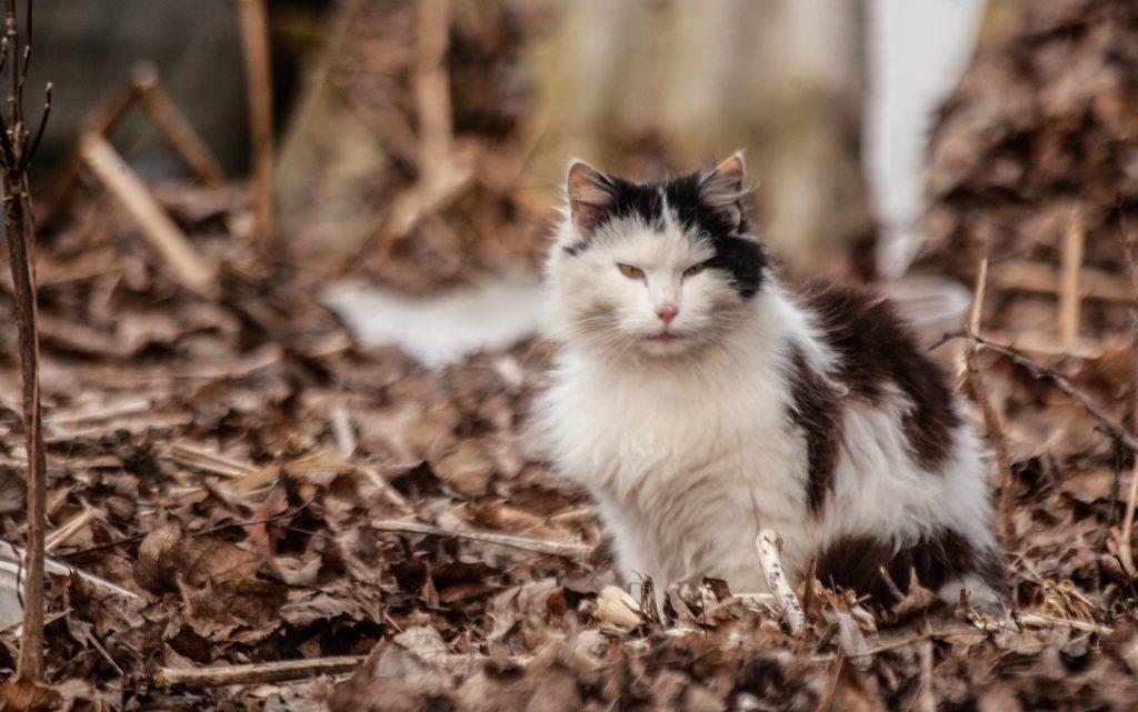 Мартовские коты в Даугавпилсе. Фотоистория