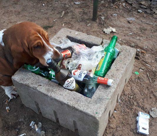 Собачья площадка