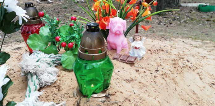 Кладбище домашних животных на Новом форштадте в Даугавпилсе