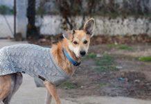 Тарзан из Даугавпилсского приюта для животных. Фото предоставила Оксна Бондарь