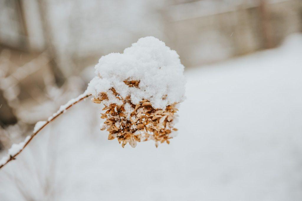 28 февраля 2020 года, Даугавпилс, Стропской лес. Фото: Ирина Маскаленко