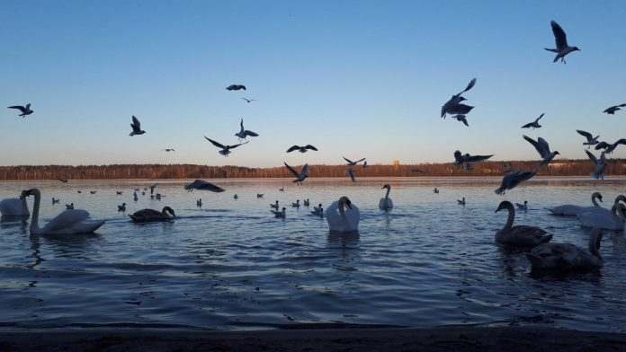 Озеро Большие Стропы в Даугавпилсе. 24 марта 2020 года. Фото: Инна Плавока