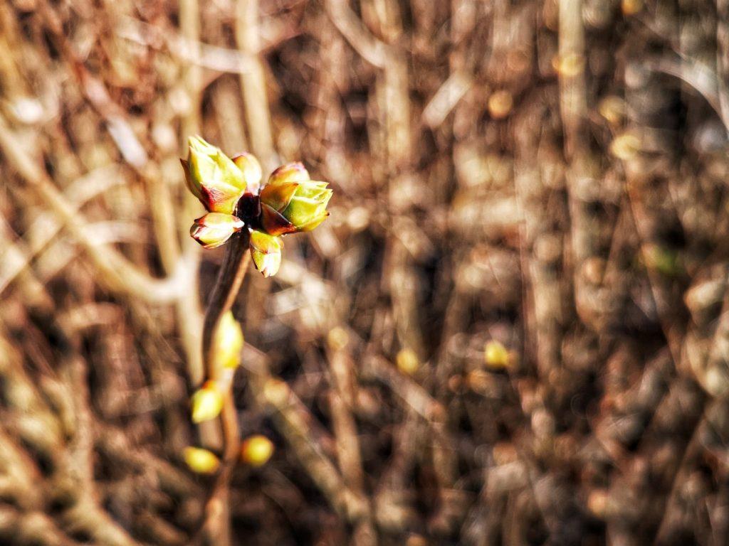 Весна в Даугавпилсе Фото: Сергей Соколов