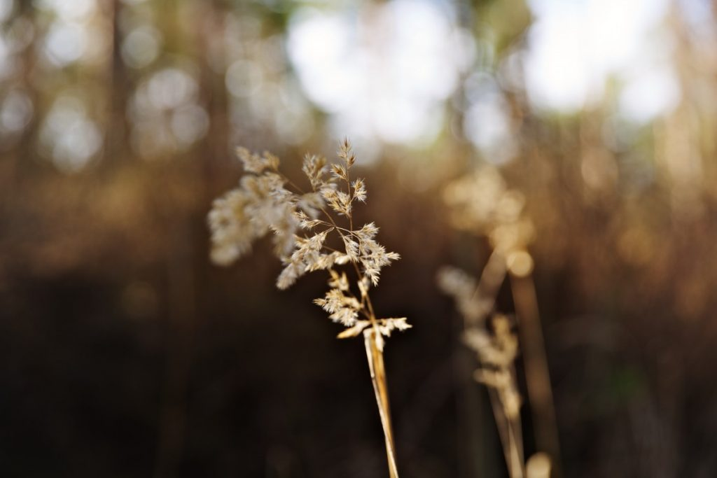 20 марта 2020 года. Даугавпилс, Стропской лес. Фото: Ирина Маскаленко