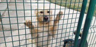 """Приют для животных """"Второй дом"""", Латвия, Даугавпилсский край. Фото предоставлено приютом"""