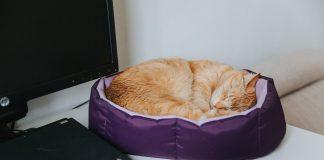 Обогреваемая подушка CatNap, которую придумали даугавпилчане. Фото: Ирина Маскаленко