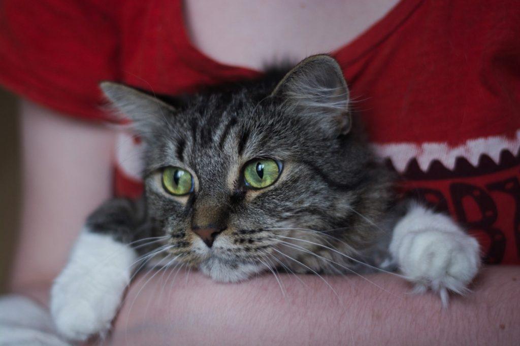 Кошка Евгении Вакух Мириам
