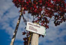 Сад ощущений в посёлке Общества слепых в Даугавпилсе. 28 мая 2020 года. Фото: Сергей Соколов