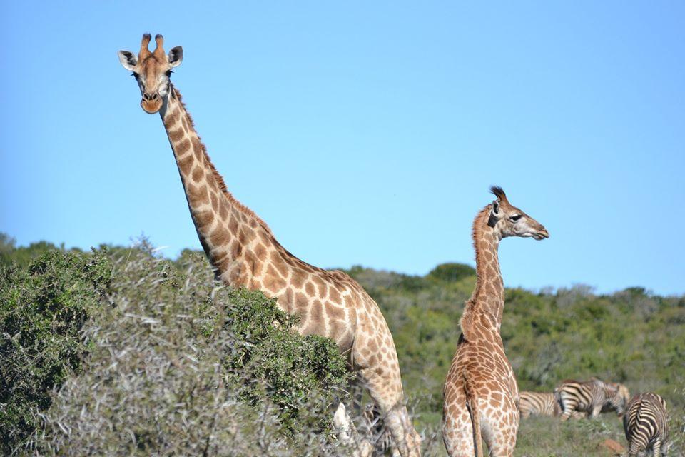 ЮАР. Фото из личного архива Леона Морозова