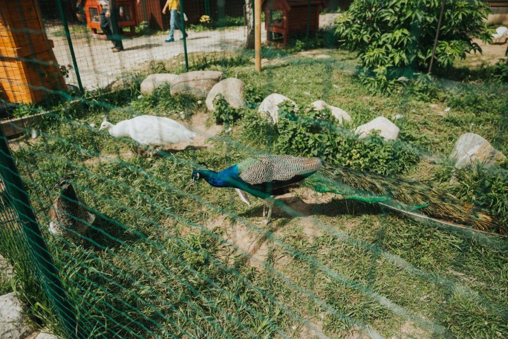 Raptors parks