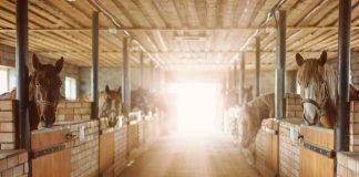 """Фото со страницы хозяйки конного двора """"Клаюми"""" Илзе Стабулниеце на фейсбуке"""