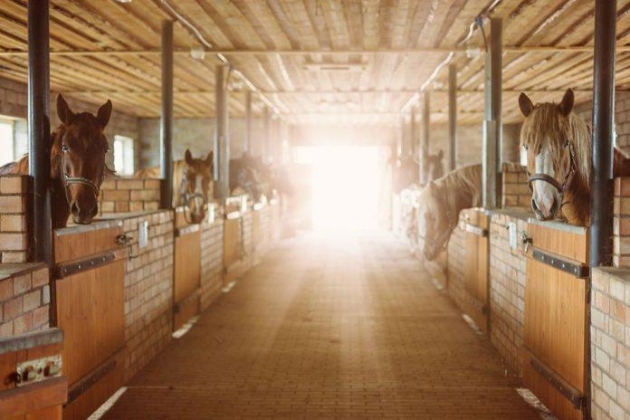 Фото со страницы хозяйки конного двора