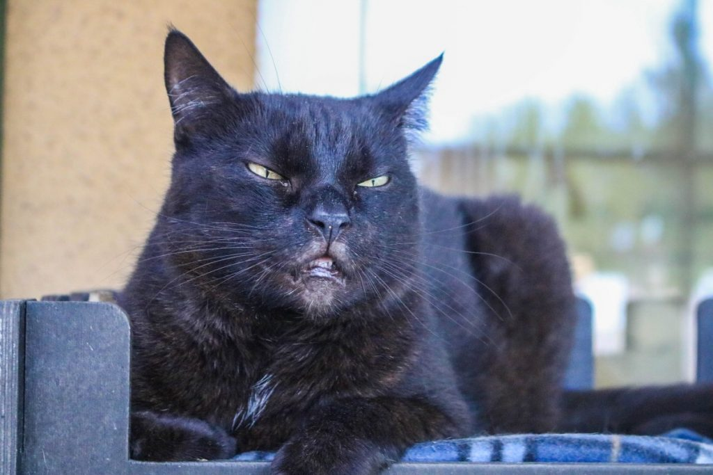 Чёрный кот из даугавпилского приюта для животных. Фото: Настя Гавриленко