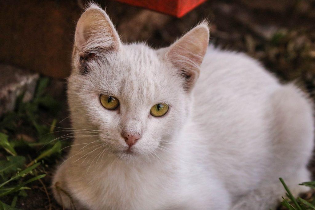 Даугавпилсский приют для животных. Фото: Настя Гавриленко