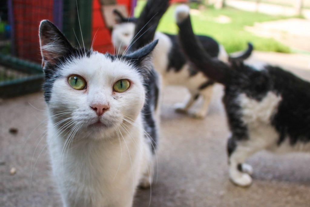 Коты из даугавпилского приюта для животных. Фото: Настя Гавриленко
