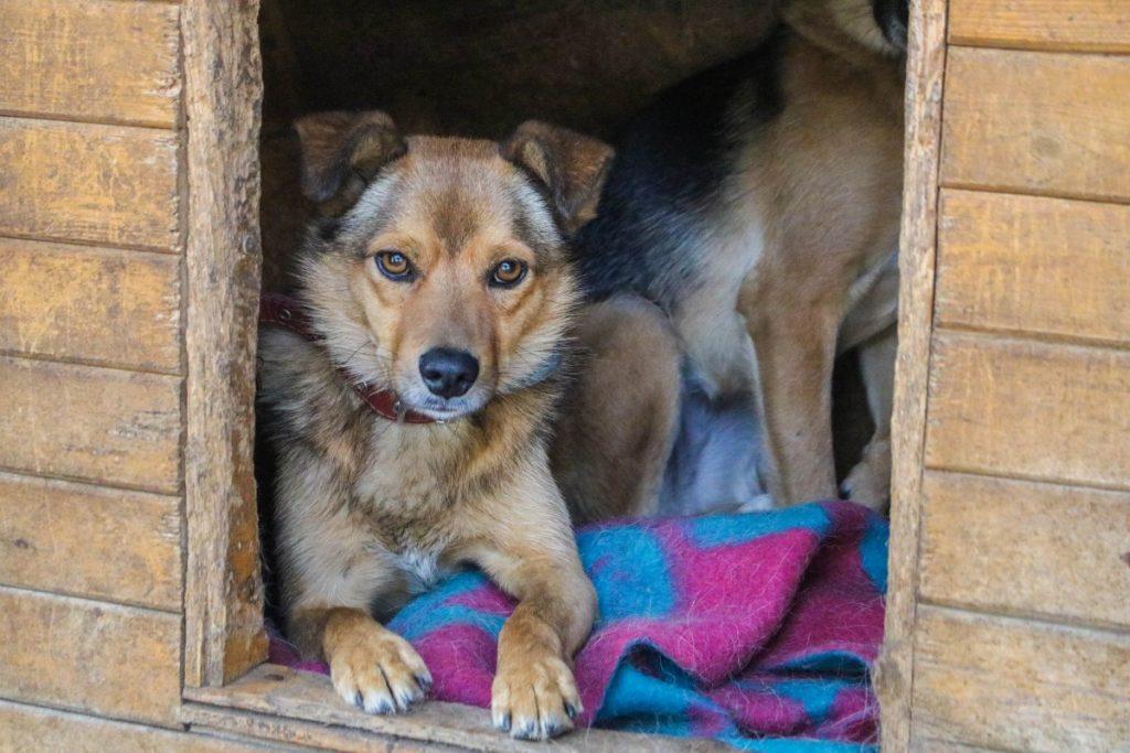 Рыжий из даугавпилского приюта для животных. Фото: Настя Гавриленко