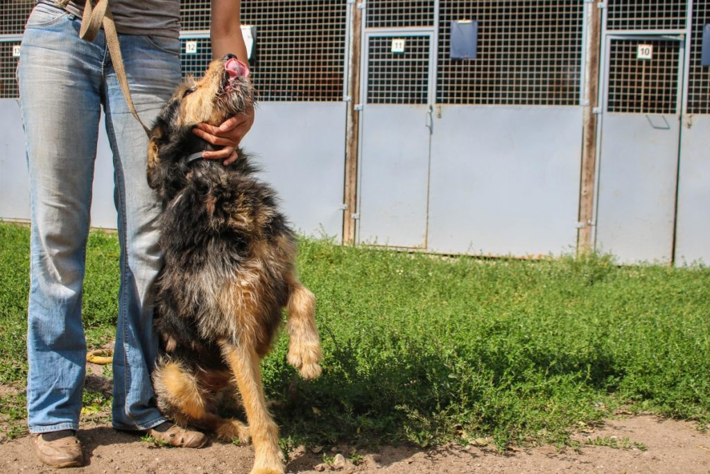 Джек из даугавпилского приюта для животных. Фото: Настя Гавриленко