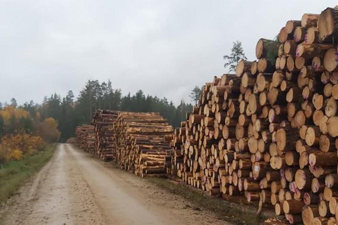 Лес в Свентской волости. Ноябрь 2020 года. Фото Галины Бобылевой