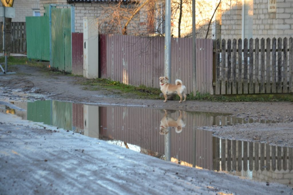 Улица Лиела в Даугавпилсе. 24 ноября 2020 года. Фото: Елена Иванцова