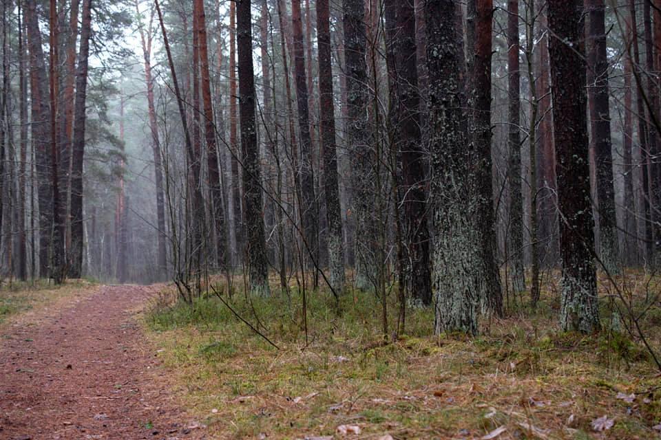 19 декабря 2020 года. Стропской лес. Фото: Витольд Рудзинский