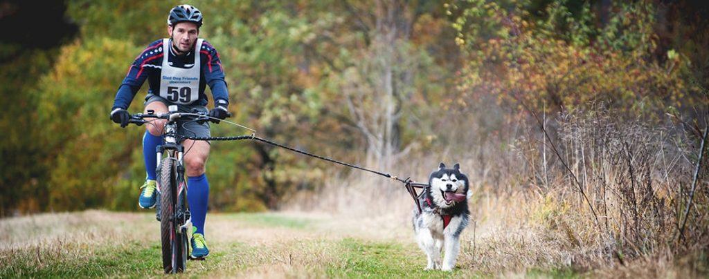 Байк-джоринг (тренировки на велосипеде с собакой).Фото: activedogsports.com