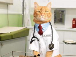 """Вебинар """"Благополучие кошек, содержание и здоровье"""""""