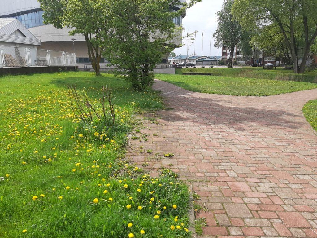 Сквер около Олимпийского центра в Даугавпилсе, май 2021 года. Фото: Елена Чурсина
