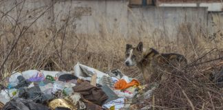 Свалки в Даугавпилсе. Апрель 2021 года. Фото: Евгений Ратков