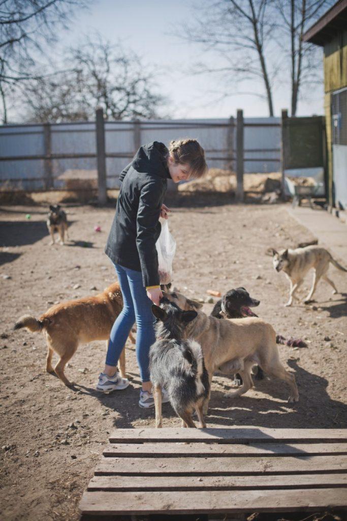 Даугавпилсский приют для животных. Апрель 2021 года. Фото: Сергей Соколов