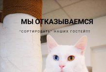Фото со страницы Аниты Озолини (кафе Kotoffski)