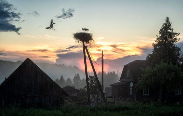 Аисты. Фото: Анатолий Киврин