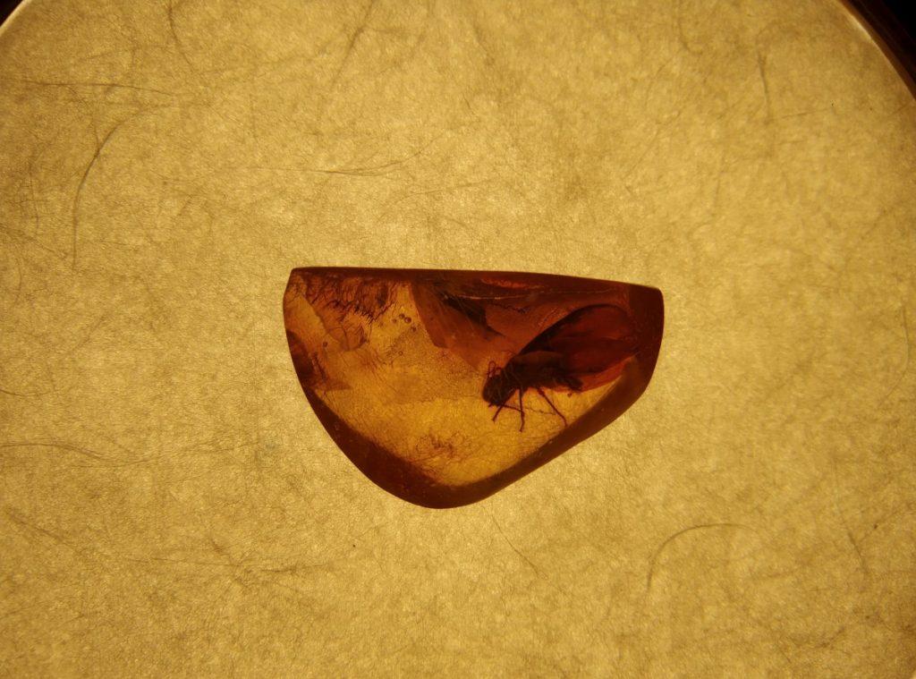 Доисторическое насекомое. Музей янтаря в Паланге. Фото: Елена Иванцова