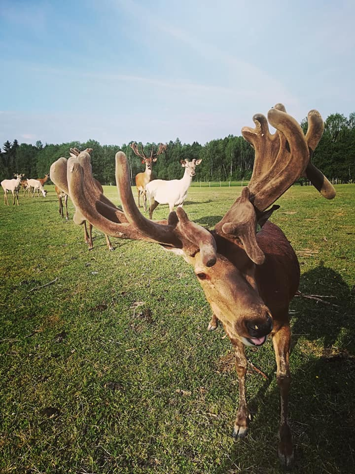 Мини-зоопарки Латвии. Фото: Виктория Трофимова-Гаике