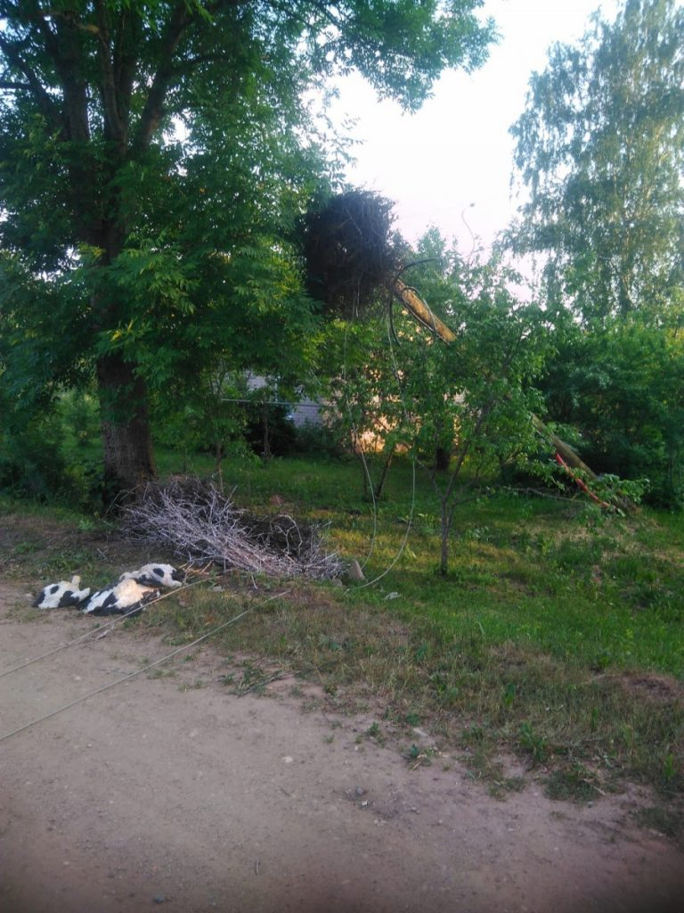 Упавшее гнездо аистов. Фото очевидца происшествия