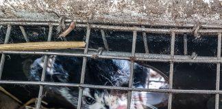 Норка в клетке. Фото: Dzīvnieku brīvība