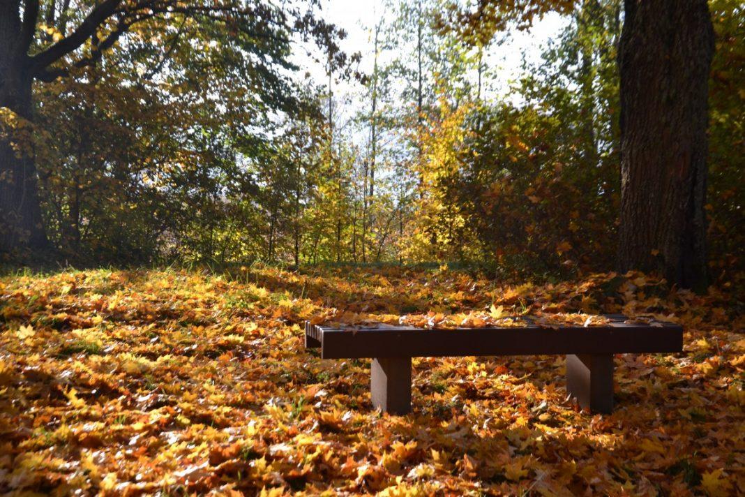 Медумский парк. Фото: Елена Иванцова